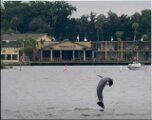 Crystal River Dolphins